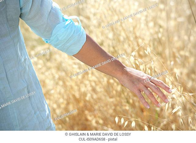Cropped image of woman's hand in corn field