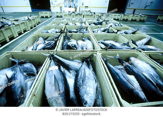 Fish Exchange. Getaria. Guipúzcoa. Euskadi. Spain