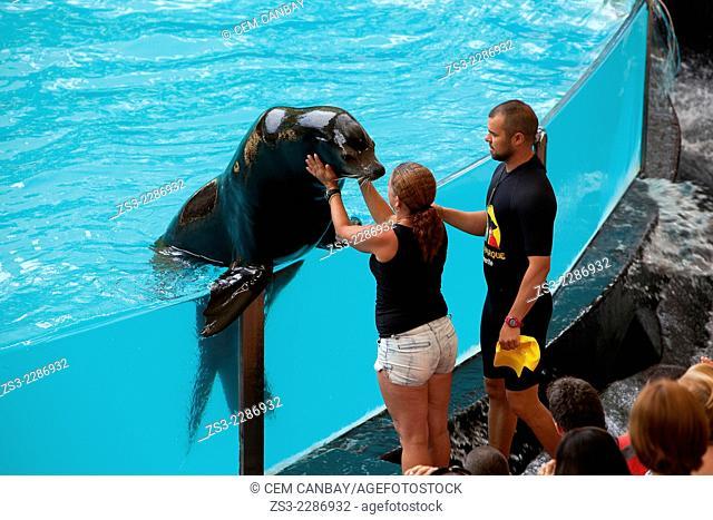 Sea lion show, Loro Park, Parque Loro, Puerto de la Cruz, Tenerife, Spain, Europe