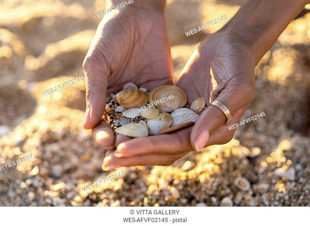 Woman collecting seashells on the beach