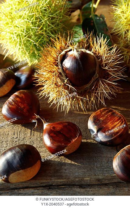Chestnut harvest, Valem Hungary