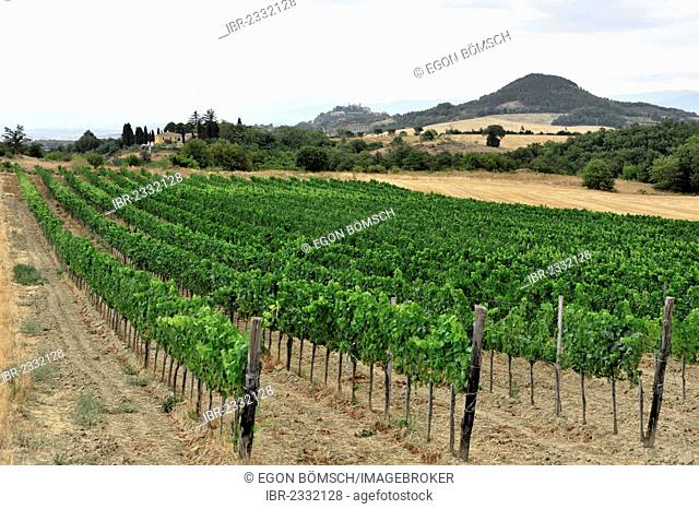 Vineyards, landscape in the Val d'Orcia valley, near Montepulciano, Tuscany, Italy, Europe
