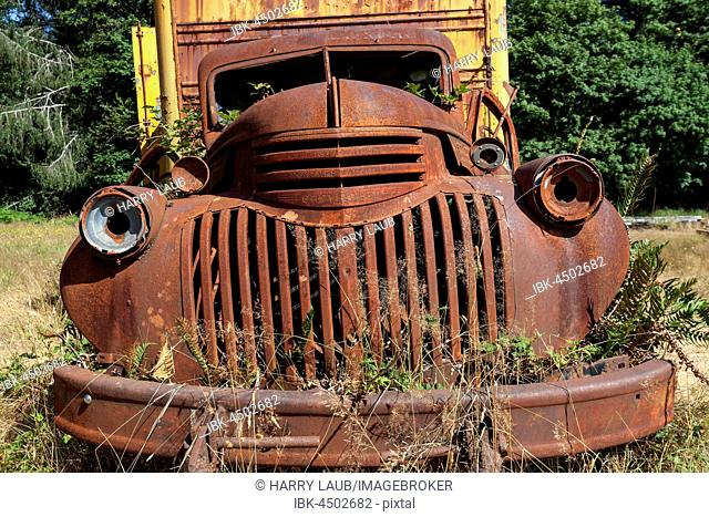 Plants growing out of vintage truck, scrap car, Chevrolet, Kestner Homestaed, Olympic Peninsula, Olympic National Park, near Quinault, Washington, USA