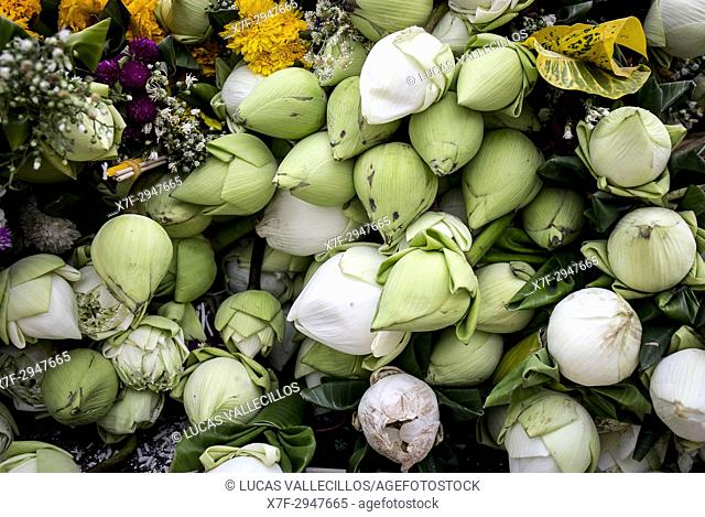White lotus flowers offerings, in Wat Suan Dok, Chiang Mai, Thailand