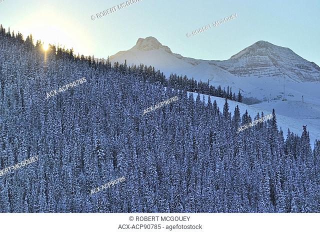 A late afternoon landscape image of the sun sinking behind a forest of spruce trees on a hillside near Cadomine Alberta Canada