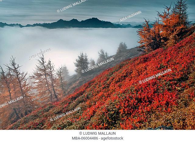 Austria, Tyrol, Pitztal (valley), autumn mood on the Venetalm (alp)