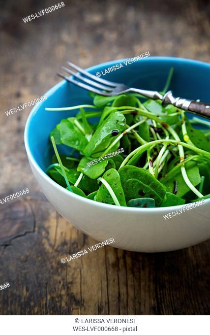 Bowl of winter purslane salad (Claytonia perfoliata) on wooden table