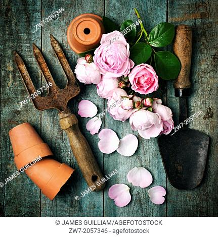 Roses with garden hand tools and terracotta plant pots