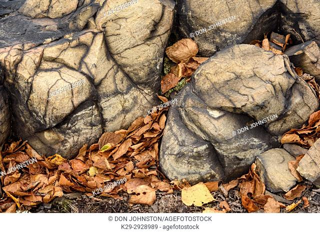Exposed stained rocks and fallen autumn leaves, Greater Sudbury, Ontario, Canada