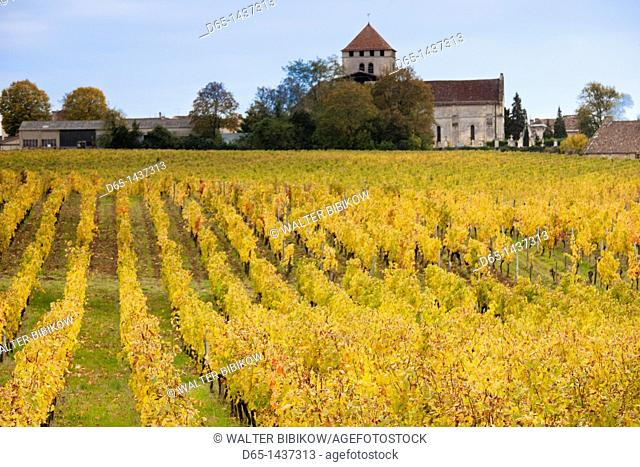 France, Aquitaine Region, Gironde Department, Montagne, vineyards in autumn