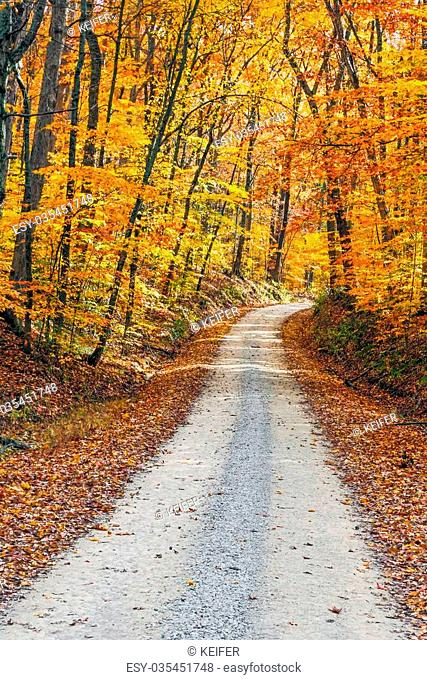An unpaved gravel road winds through a forest with intensely colorful fall foliage. Shot in Indiana's Brown County