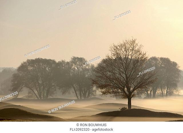 Trees on golf course at sunrise on a misty autumn morning, caledon, ontario, canada