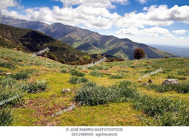 Cuerda de Pie Enmedio in the Sierra de Gredos. Avila. Castilla Leon. Spain. Europe