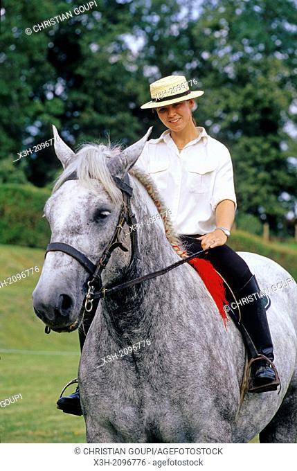 rider on Percheron horse, Regional Natural Park of Perche, Orne department, Lower Normandy region, France, Western Europe