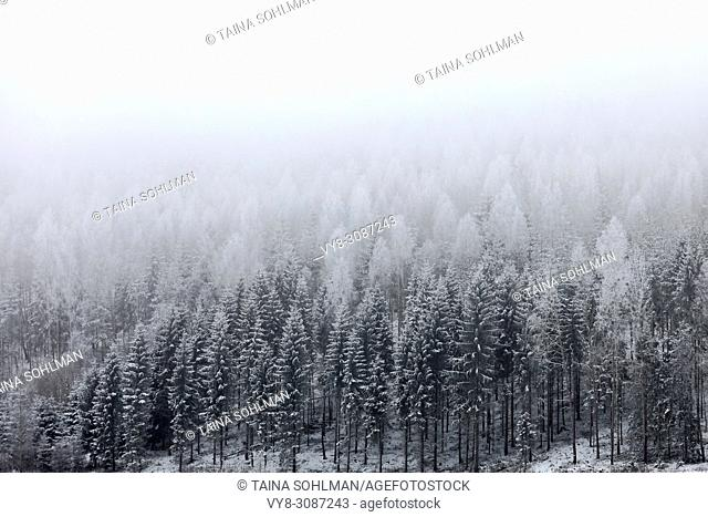 Landscape with fog over snowy forest in winter. Salo, Finland