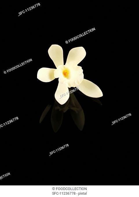 A vanilla flower against a black background
