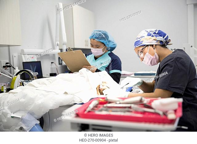 Veterinarians performing surgery in clinic