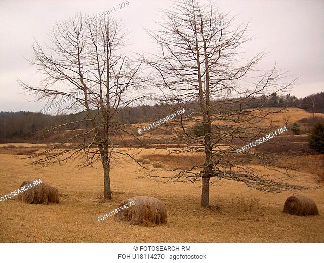 trees, hay bales, Blue Ridge Parkway, Galax, Virginia, VA