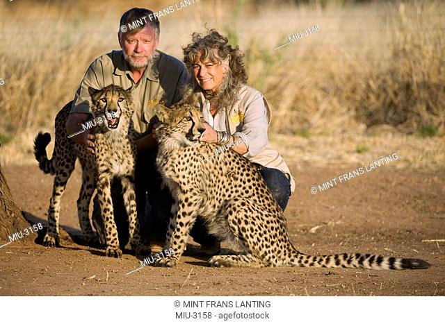 Two people with cheetahs, Acinonyx jubatus, Cheetah Conservation Fund, Namibia