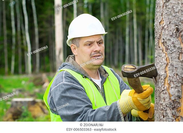 Lumberjack working in the forest with an ax