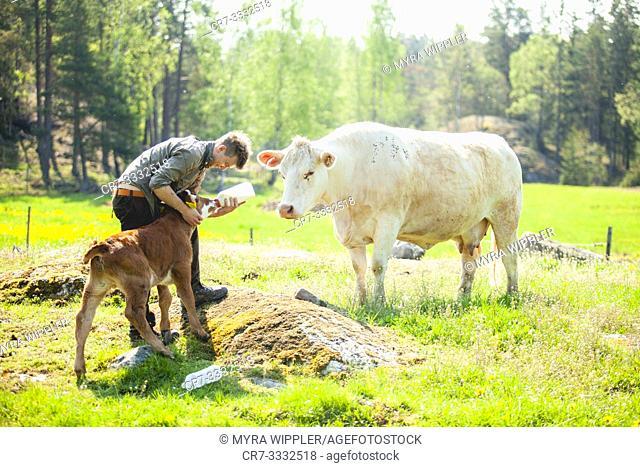 Farmer feeding milk to calf in summer field