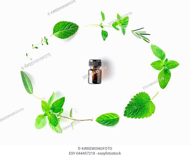 Bottle of essential oil with fresh herbal sage, rosemary, oregano, thyme, lemon balm spearmint and peppermint setup with flat lay on white background