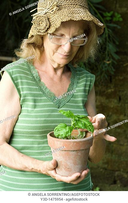Senior woman taking a basil plant in a pot