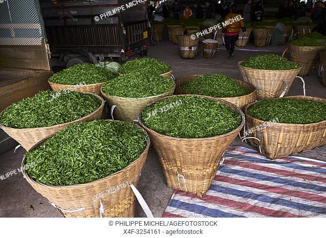 Chine, Province du Sichuan, Emei, marché de thé frais, les petits propriétaires viennent vendre la récolte du jour / China, Sichuan province, Emei
