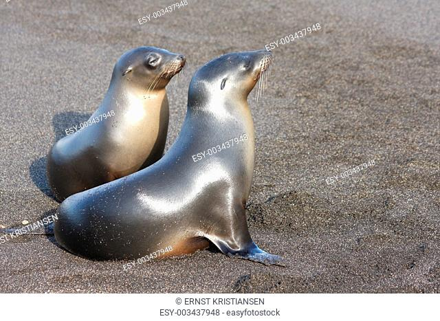 Sea lion family on the beach at Galapagos Islands