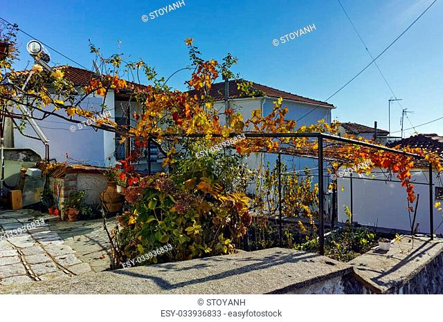 Old houses and vine in the yard, old town of Xanthi, East Macedonia and Thrace, Greece
