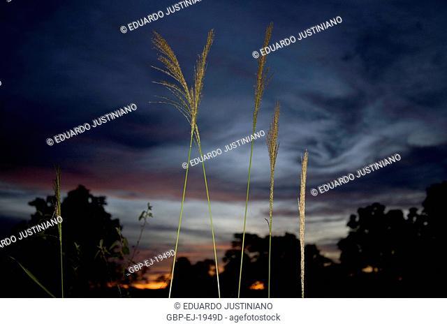 Landscape, Sunset, Miranda, Mato Grosso do Sul, Brazil