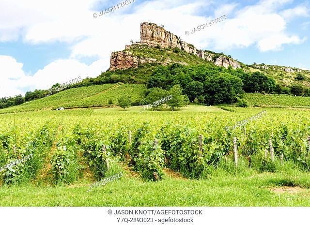 The limestone escarpment known as the Rock of Solutré, overlooking the vineyards of Solutré-Pouilly in Mâcon, Saône-et-Loire, Bourgogne-Franche-Comté, France