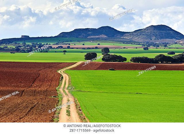 Campo verde cereales y camino  Bonete  Albacete