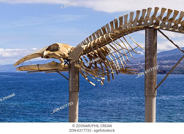 Balaennoptera boreales, sei whale skeleton on the coast at Los Silos in Tenerife, Canary Islands, Spain