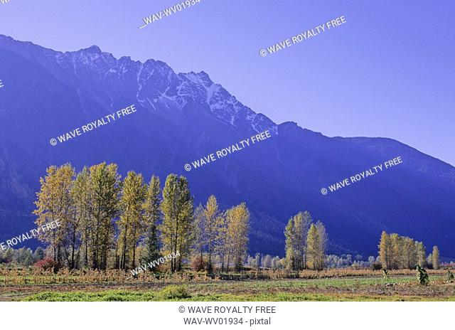 Farmland in autumn colors is Pemberton, BC, with Mt Currie above