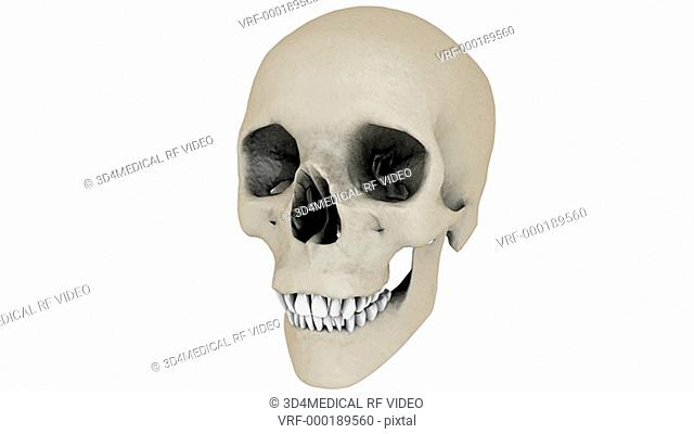A full rotation in an anti-clockwise motion of the skull