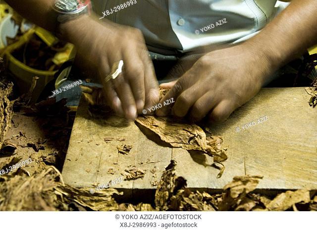 Cuba, Havana, tobacco shop