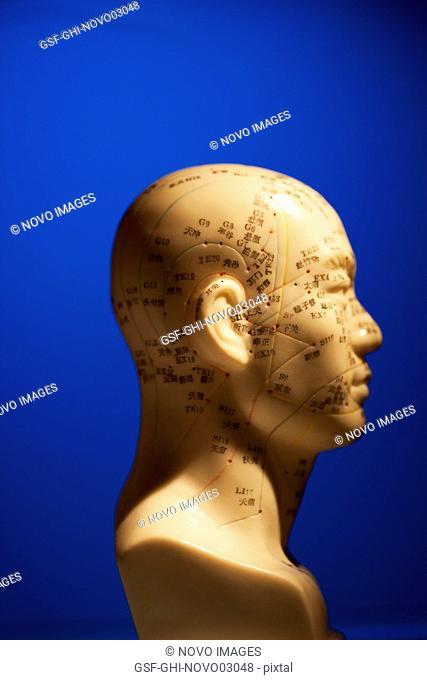 Phrenology Head on Blue Background, Profile