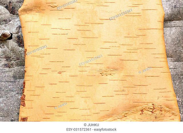 Birch bark texture inside