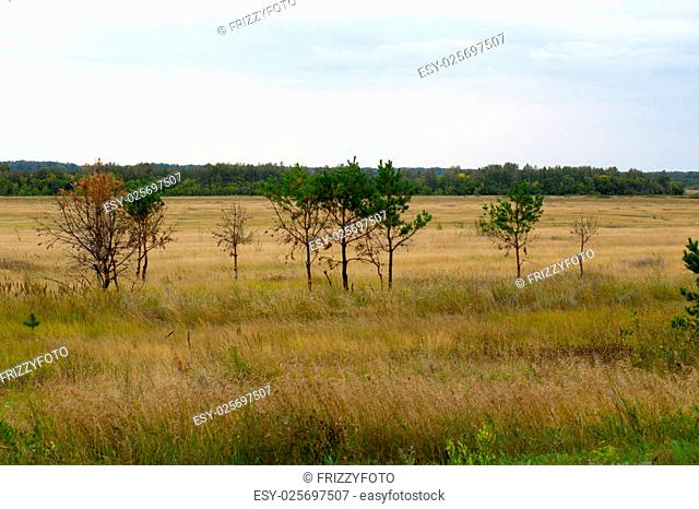 Yellow grass in the steppe and blue sky photo for you