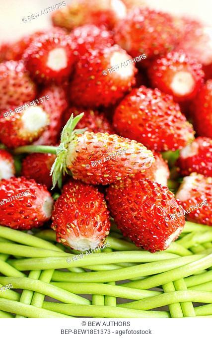 Wild strawberries. Summer healthy fruits