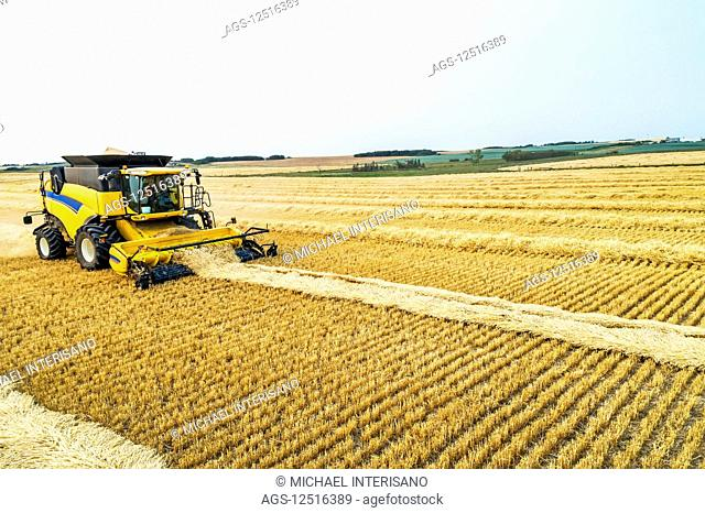 Close-up of a combine collecting lines of cut grain; Beiseker, Alberta, Canada