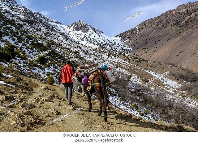 Ber Ber (Berber or Bier Bier) man transporting hood by mule. High Atlas Mountains. Imlil. Morocco