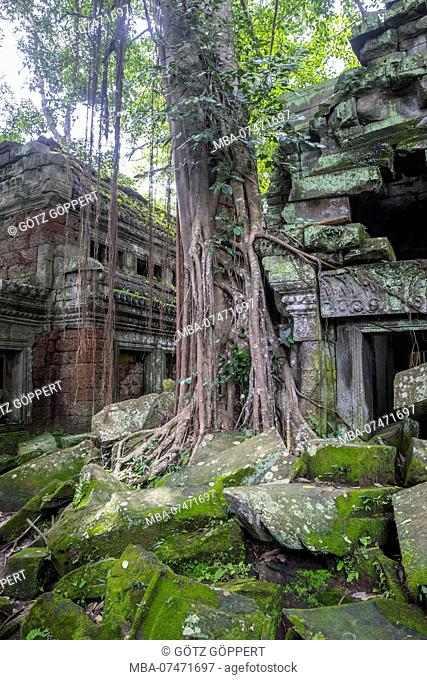 Siem Reap, Angkor, Temple Tha Prom, a temple in the jungle, overgrown by nature