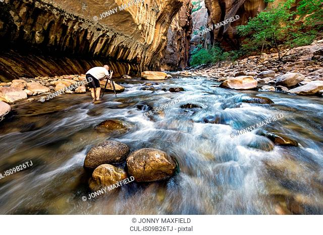 Man standing in river taking photograph, rear view, The Narrows, Zion National Park, Zion, Utah, USA
