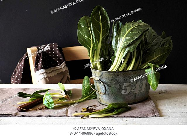Fresh chard in a vintage metal tub on a table
