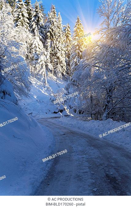 Sunshine over path in snowy forest