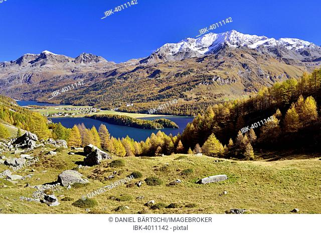 Views of Lake Sils and Piz Corvatsch in autumnal Upper Engadine, Sils-Baselgia, Sils-Maria, Engadin, Grisons, Switzerland