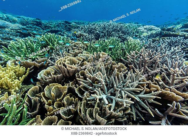 A profusion of hard and soft coral underwater on Siaba Kecil, Komodo National Park, Indonesia
