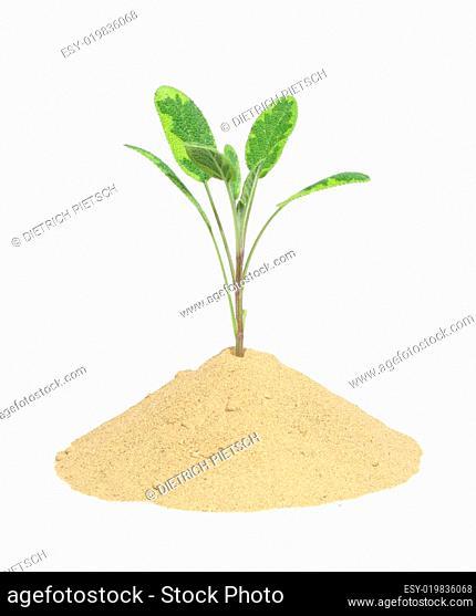 Wachstum 2